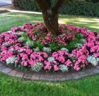Как сделать клумбу из досок для цветов