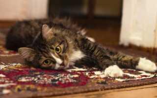 Как избавиться от запаха мочи на ковре: народные средства и бытовая химия