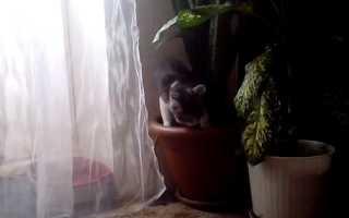 Что сделать чтоб кошка не рыла цветы