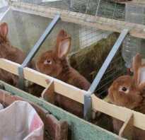 Как сделать крольчатник своими руками схема