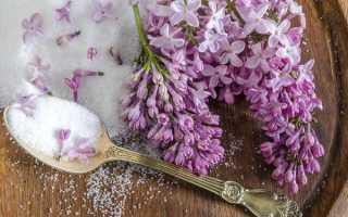 Что можно сделать из цветков сирени