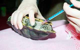 Как сделать укол черепахе