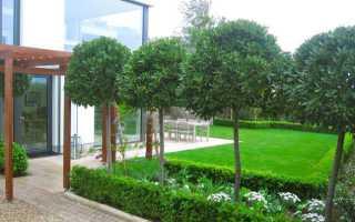 Как сделать штамбовое дерево