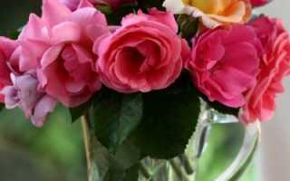 Что сделать чтоб розы долго стояли