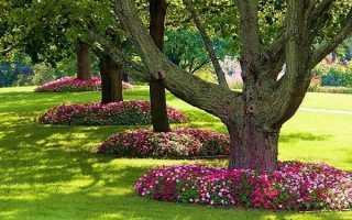 Как сделать приствольный круг для дерева