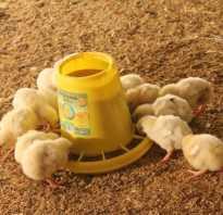 Как сделать кормушку цыплятам из пластиковой бутылки