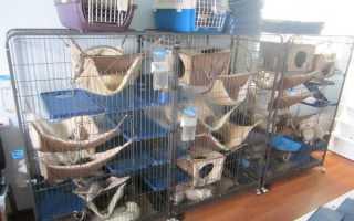 Как сделать домик для крысы